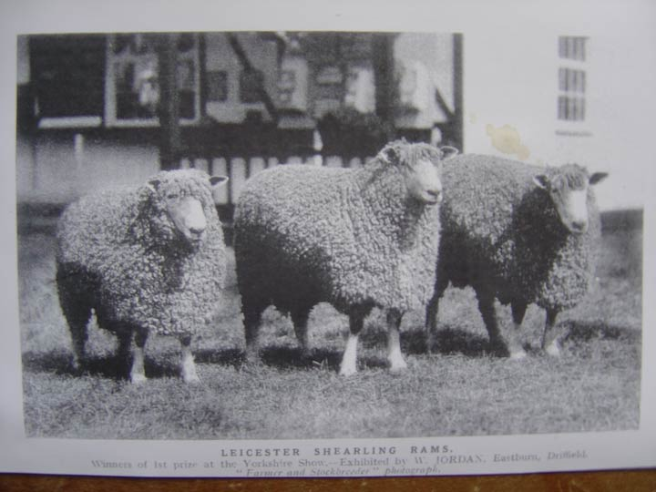 Leicester Longwools
